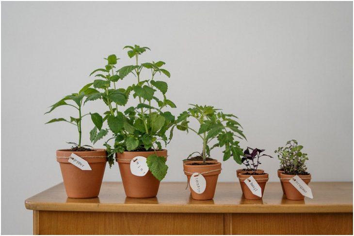 Design Scene Guide How To Start A Small Indoor Garden