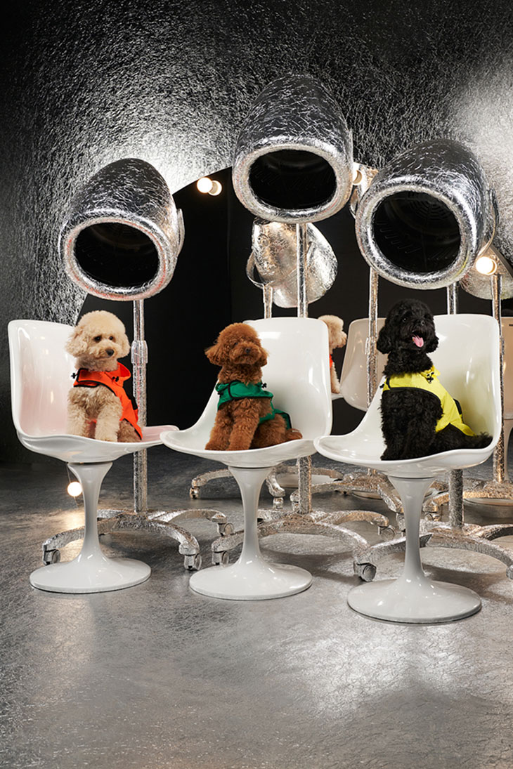 Dress Your Furry Friend in Couture: Poldo Dog Couture X Moncler
